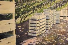 Oogsttijd in de druivenkas